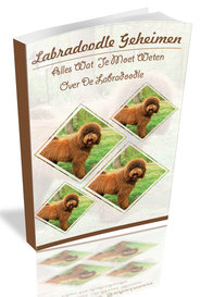 labradoodle geheimen review